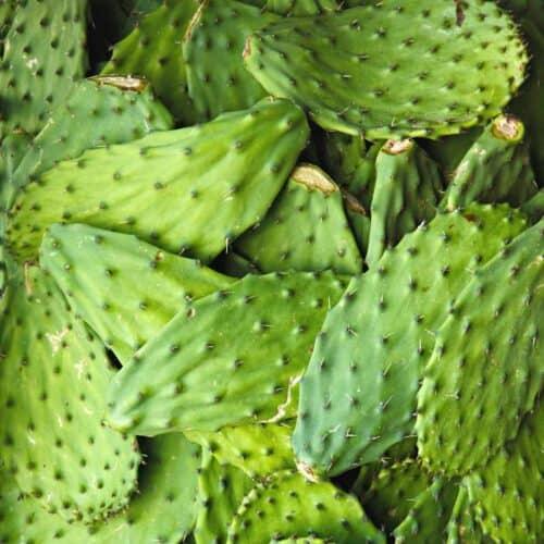 nopales 500x500 - Keto Resources